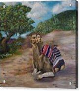 Life In Israel Acrylic Print