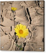 Life In The Desert Acrylic Print
