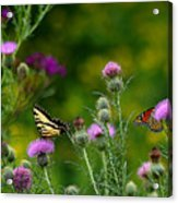 Life In The Meadow Acrylic Print