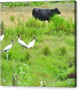 Life In The Slough Acrylic Print