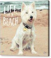 Life Is A Beach Dog Square Acrylic Print