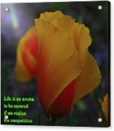 Life Is An Aroma  Acrylic Print