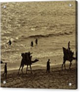 Life Near The Arabian Sea Acrylic Print