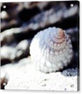Life Of A Shell In Eleuthera Acrylic Print
