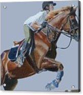 Horse Jumper Acrylic Print