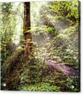 Light Along The Trail Acrylic Print
