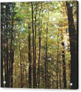 Light Among The Trees Vertical Acrylic Print