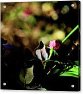 Light And Shadow In The Garden Acrylic Print