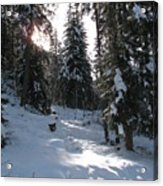 Light And Shadow On A Snowy Landscape Acrylic Print