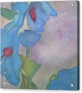 Light Blue Poppies Acrylic Print