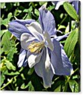 Light Blue Acrylic Print