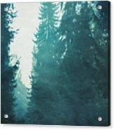 Light Coming Through Fir Trees In Mist Acrylic Print