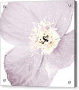 Light Dusty Lavender Poppy Acrylic Print