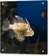 Light Fish Acrylic Print