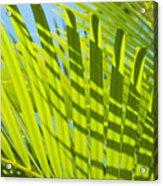Light Green Palm Leaves Acrylic Print