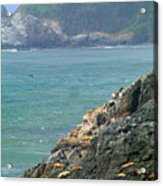 Light House And Sea Lions Acrylic Print