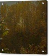 Light In Autumn Acrylic Print