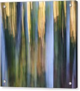 Light In Evening Forest Acrylic Print