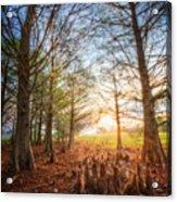 Light In The Cypress Trees II Acrylic Print