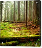 Light In The Forest Acrylic Print by Idaho Scenic Images Linda Lantzy