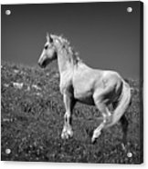 Light Mustang 1 Bw Acrylic Print by Roger Snyder