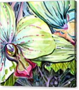 Light Of Orchids Acrylic Print