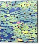 Light On Lily Pads Acrylic Print