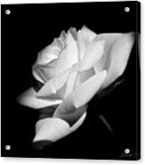Light On Rose Black And White Acrylic Print