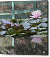 Light Pink Water Lily Acrylic Print