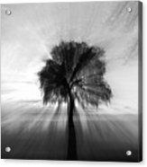 Light Play Acrylic Print