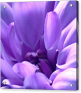 Light Purple Beauty Acrylic Print