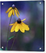 Light Springing From Darkness Acrylic Print