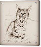 Light Sweet Cat Acrylic Print