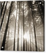 Light Through Forest Acrylic Print