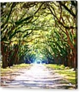 Light Through Live Oak Lane Acrylic Print