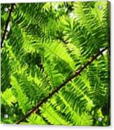 Light Through The Green Acrylic Print