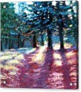 Light Through The Pines Acrylic Print