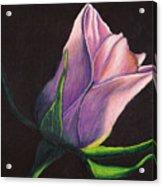 Lighted Rose Acrylic Print