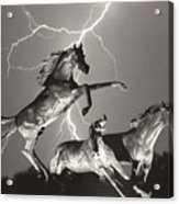 Lightning At Horse World Acrylic Print