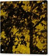 Lighttthru Forest Acrylic Print