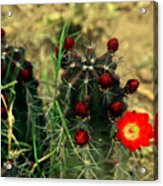 Like A Little Red Star Acrylic Print