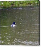 Like Rain Off A Ducks Back Acrylic Print