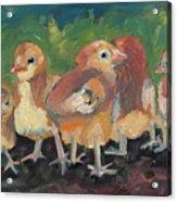 Lil' Chicks Acrylic Print