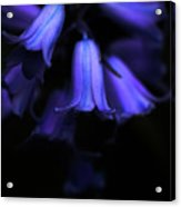 Bluebell Abyss Acrylic Print
