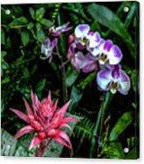 Lilac And Pink Acrylic Print