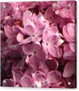 Lilac Beauty Acrylic Print