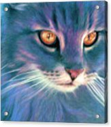 Lilac Cat Acrylic Print