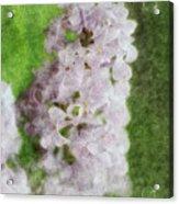 Lilac Dreams - Digital Watercolor Acrylic Print