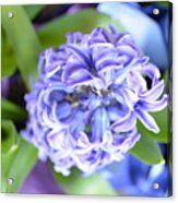 Lilac In Bloom Acrylic Print