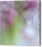 Lilac. Spring Vibrations Acrylic Print
